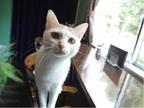 知る人ぞ知る! 猫がいる隠れ家的喫茶店「黒猫喫茶」とは?