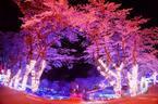 """相模湖で夜桜デート! ソメイヨシノ""""2千本""""が織りなす、幻想的なイルミネーションが開催"""