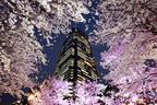 東京ミッドタウンでお花見「ミッドタウン・ブロッサム 2014」開催、スパークリングワインの振る舞いも