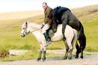 """""""馬の視点で描く""""前代未聞のアイスランド映画『馬々と人間たち』公開決定"""