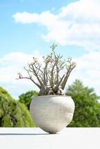 西畠清順の展覧会「ウルトラ植物博覧会」銀座で開催 - 世界中の希少植物が集結