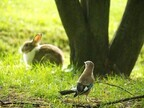 【夢占い】吉凶を占う!かわいい動物にまつわる夢4つ