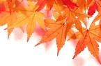 紅葉狩りをより楽しむためのワンポイント!名前の最初の文字でわかるコトダマ診断