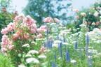 ●【夢占い】吉凶を占う!プランターや花壇、庭にまつわる夢4つ