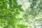 【愛を叶える風水】恋愛運を上げる方位は?今回は「夏枯草(かこそう)」(6/21~25)期