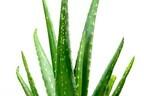 「植物パワー」に注目!コスメに含まれる植物性エキス、おすすめの3つはコレ
