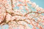 自然と運気が上がっていく!春分におすすめの運気アップ法とは?