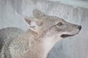 【夢占い】意外!幸運を招く動物の夢・4つ