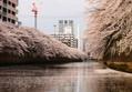お花見クルーズという最高の贅沢! Captain Shin号の「東京ベイクルーズ」で満開の桜を満喫♪