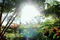 いつでもできる、ハワイの伝統的な問題解決法「ホ・オポノポノ」で、心のクリーニングを