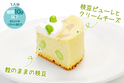 低糖質で驚きの美味しさ『枝豆チーズケーキ』が期間限定販売