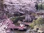 桜を愛でながら運気もアップ! 開運ご利益お花見スポット3