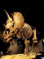 まるでナイトミュージアム! 『恐竜博2011』の夜間特別鑑賞会が開催!
