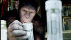 『猿の惑星』は現実に起こり得る!? 猿たちの驚きの映像が公開に