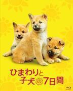 堺雅人主演『ひまわりと子犬の7日間』が今夏にソフト化決定