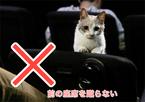 """愛らしい""""劇場マニャー講座""""映像が公開"""