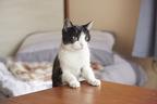 本編抜き映像が公開!犬派も絶賛な猫よん。の魅力