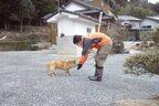 震災から4年…今も被災地では飼い主と離れたペットが放置状態?