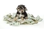 人間顔負け!世界で最も稼いだ「動物の俳優」歴代収入トップ10