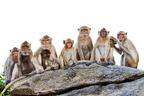 外国人に大人気!50年以上の伝統を持つ「野猿公園」トップ6