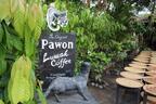 ジャコウネコの糞からとれる!?インドネシアの幻の最高級コーヒー