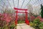 シンガポールでお花見を!ガーデンズ・バイ・ザ・ベイで桜の展示開始