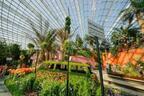シンガポール巨大植物園で「ユリ」をテーマにしたイベント開催