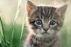 ゴロゴロ喉を鳴らすのは「どこにもいかないで」のメッセージ 猫が行動で人間に伝えたい本当の気持ち