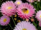 スズメバチに刺されて毎年20人死亡 突然の悲劇を避けるための5つのポイント