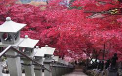 今年は遅め? 秋の絶景、紅葉観光スポット まとめ