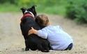 子育て中のペット飼育のメリットや注意点まとめ