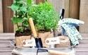初心者でも気軽に始められる!家庭菜園の楽しみ方まとめ