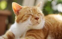 食、運動、睡眠を見直そう! 疲労回復のコツまとめ