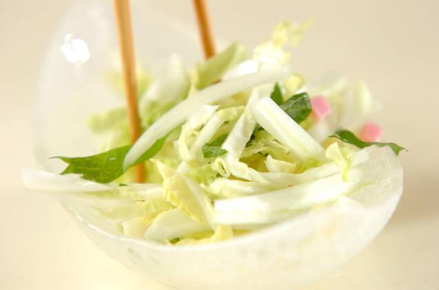 白菜と大葉のサラダの作り方の手順4