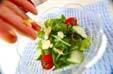 グリーンサラダの作り方6