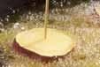 ツバスの唐揚げの作り方1