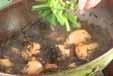 ゆで卵ひじきこっくり煮の作り方3