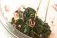 ニラと桜エビの甘酢和えの作り方1