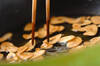 スタミナウナギハーブ丼の作り方の手順3