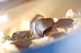 キノコのリゾットの作り方3