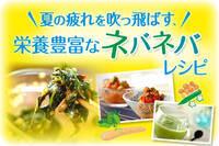 夏の疲れを吹っ飛ばす、栄養豊富なネバネバレシピ