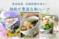 食欲促進、抗菌殺菌作用も!効能が豊富な和ハーブ