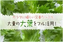 カラダに嬉しい栄養たっぷり、大量の大葉をフル活用!