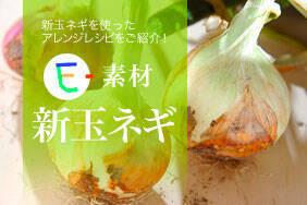 E-素材 新玉ネギ