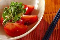 トマトと貝われの山椒サラダ