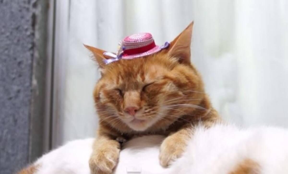 動画 猫の上にものをのせる のせ猫 ゆるすぎる日本の猫に海外からラブコール 2014年11月25日 エキサイトニュース