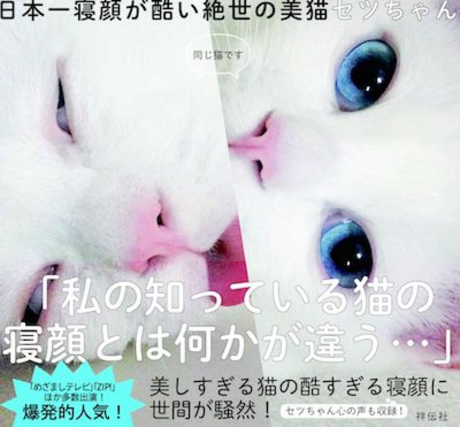 天使と悪魔の顔を持つスター猫・セツちゃんの写真集がついに登場! - Excite Bit コネタ(1/3)