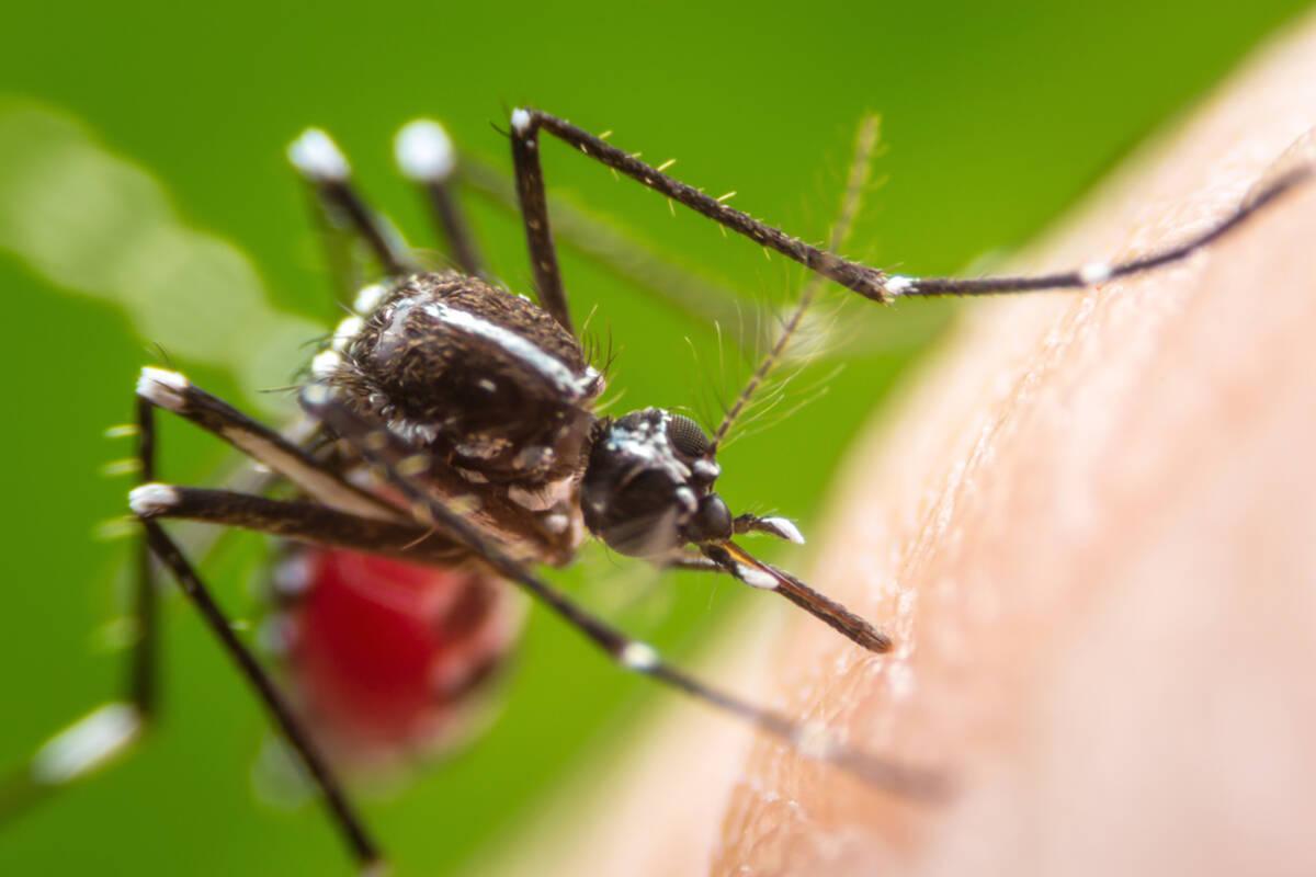 なんでこんなに腫れるの!? 蚊に刺されが「ヒドくなる人の体質」とは ...