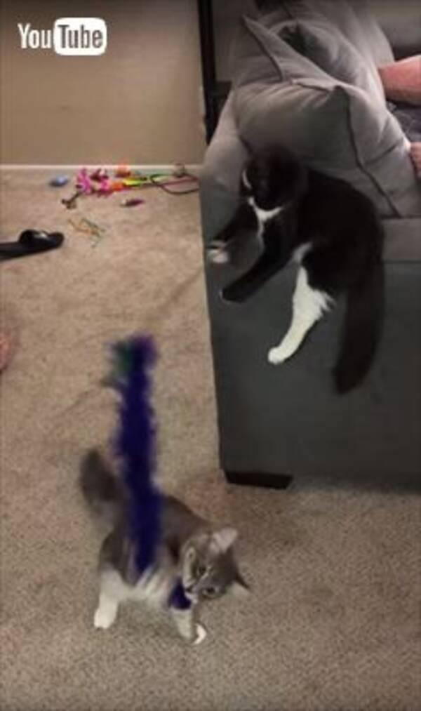 猫が猫と遊んであげる図が面白かわいい 猫同士の猫じゃらし