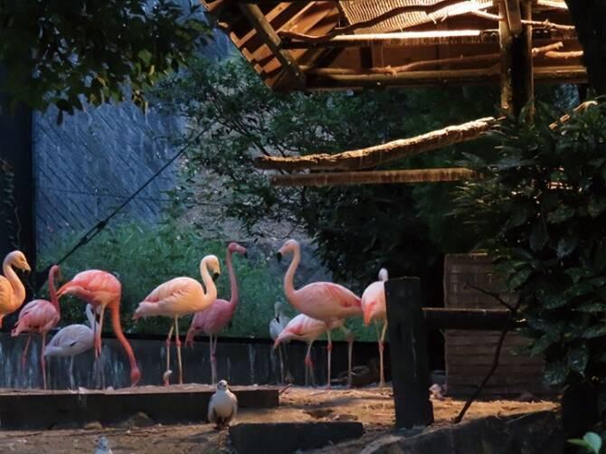 夏限定のお楽しみ♪夜の動物園&水族館が面白い!九州のナイトズー&アクアリウム8選 (2017年7月12日) - エキサイトニュース